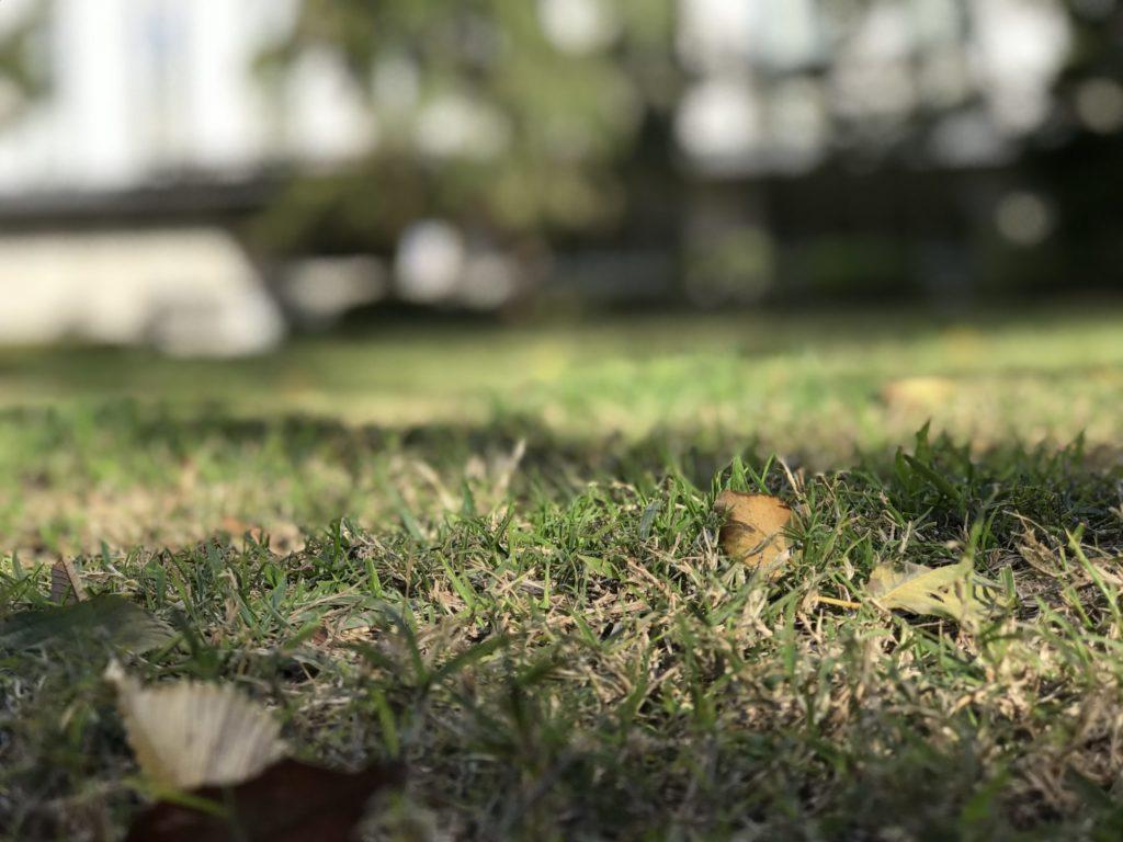 芝生のアップ
