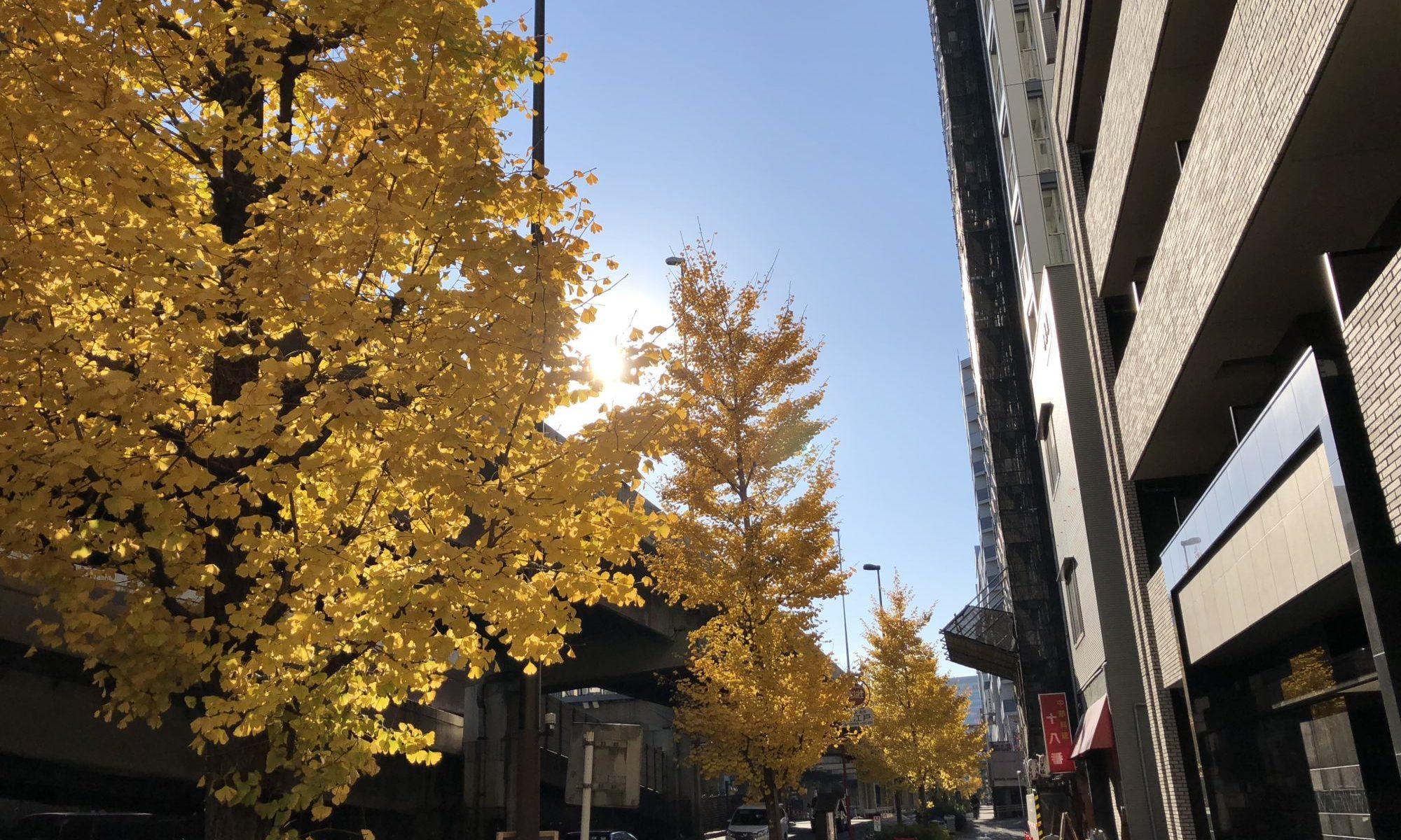 葉っぱが黄色くなった銀杏の街路樹