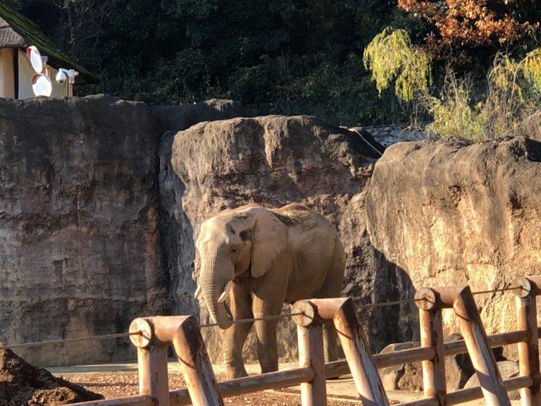 多摩動物公園のぞう