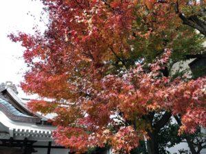 鳥越神社の紅葉