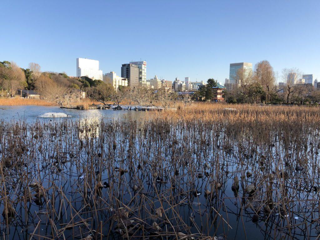 冬の不忍池